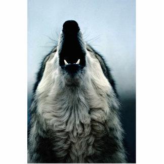 Lobo mexicano, especie en peligro, desierto de fotoescultura vertical
