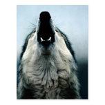 Lobo mexicano, especie en peligro, desierto de Son Tarjeta Postal