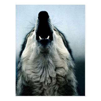 Lobo mexicano, especie en peligro, desierto de Son Tarjetas Postales