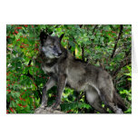 Lobo negro con la tarjeta de felicitación roja de