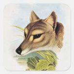 Lobo o tigre tasmano calcomanía cuadradase