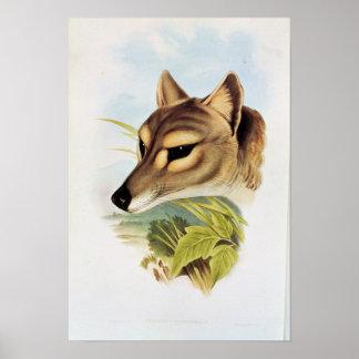 Lobo o tigre tasmano posters