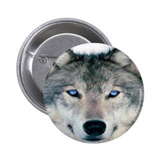 Lobo observado azul pin redondo de 2 pulgadas