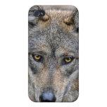 Lobo para arriba 4 cercanos iPhone 4 coberturas