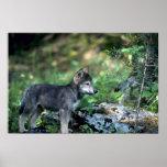 Lobo-pequeño perrito gris en maderas verdes impresiones