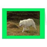 Lobo polar tarjetas