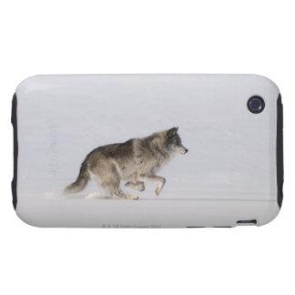 Lobo que corre en la nieve 2 iPhone 3 tough coberturas