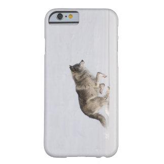 Lobo que corre en la nieve 2 funda barely there iPhone 6