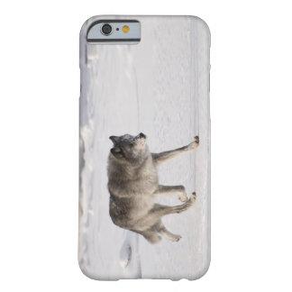 Lobo que corre en la nieve funda barely there iPhone 6