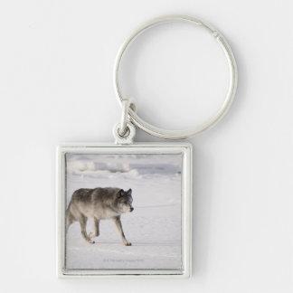 Lobo que corre en la nieve llavero cuadrado plateado