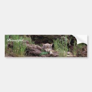 Lobo que descansa delante de guarida pegatina para auto