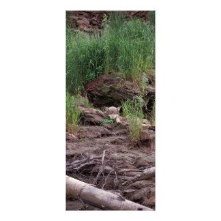 Lobo que descansa delante de guarida tarjeta publicitaria personalizada