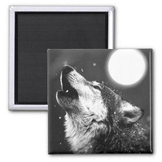 Lobo que grita en la luna imán cuadrado
