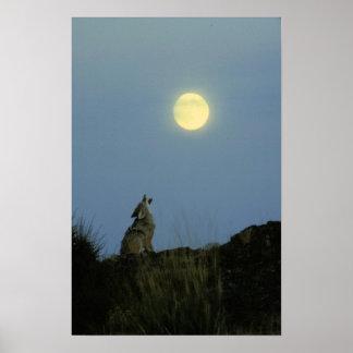 Lobo que grita la Luna Llena Poster
