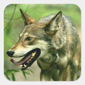 Lobo rojo astuto norteamericano pegatina cuadrada
