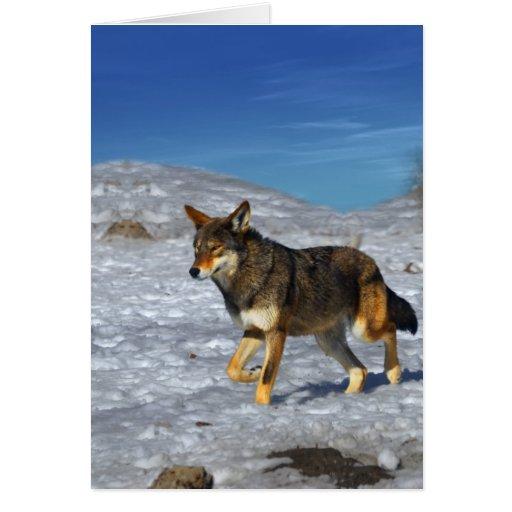 Lobo rojo febrero de 2011 tarjeta de felicitación