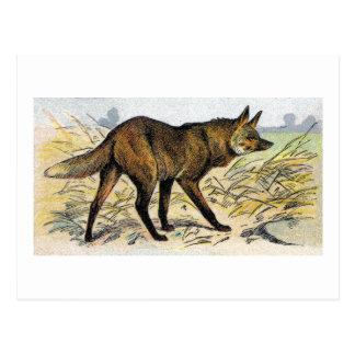 Lobo rojo postales