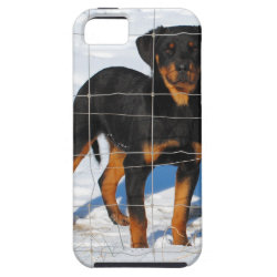 Lobo Rottweiler iPhone SE/5/5s Case