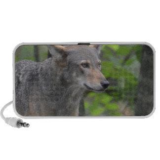 Lobo salvaje mini altavoces