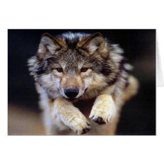 Lobo salvaje tarjeta de felicitación