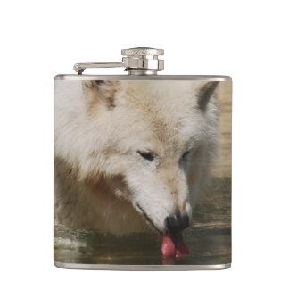 Lobo sediento