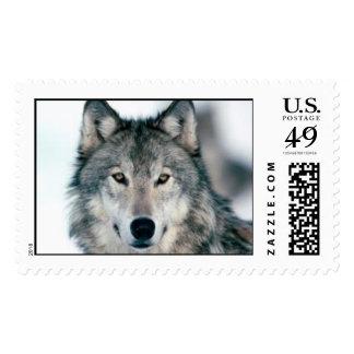 lobo sello postal