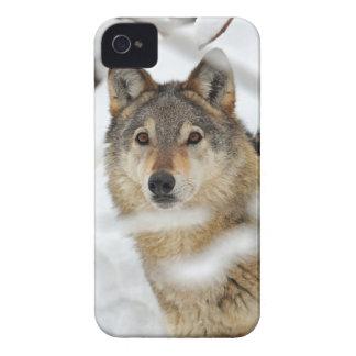 Lobo solitario en caso del iPhone 4 de la nieve Case-Mate iPhone 4 Fundas