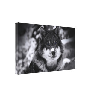 Lobo solitario impresión en lona