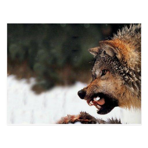 Lobo Tarjetas Postales