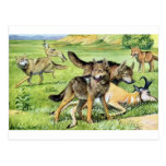lobo y coyote postales