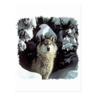 Lobos del lobo de la nieve tarjetas postales