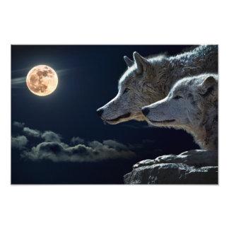 Lobos del lobo que gritan en la Luna Llena en la Fotografías