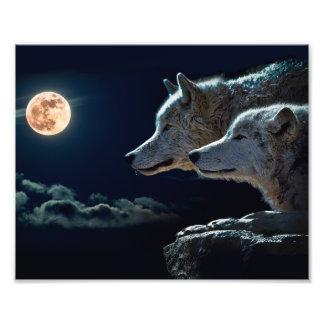 Lobos del lobo que gritan en la Luna Llena Fotografías