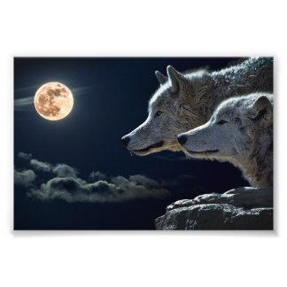 Lobos del lobo que gritan en la Luna Llena Fotografía
