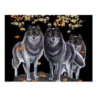 Lobos en caída postales