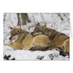Lobos en la madera de Bawarian Felicitacion