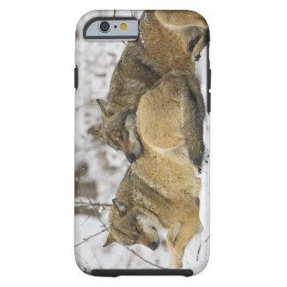 Lobos en la madera de Bawarian Funda De iPhone 6 Tough
