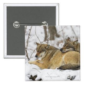 Lobos en la madera de Bawarian Pin Cuadrado
