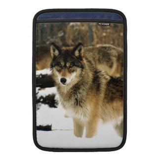 Lobos en la nieve fundas para macbook air
