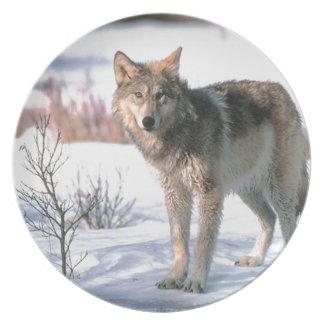 Lobos en placa fotográfica de la nieve platos para fiestas