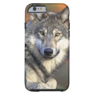 Lobos Funda De iPhone 6 Tough