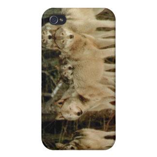Lobos iPhone 4 Coberturas
