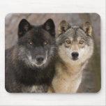 Lobos grises tapete de ratón