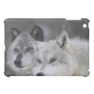 Lobos (lupus de Canus) de Yellowstone del oeste. E