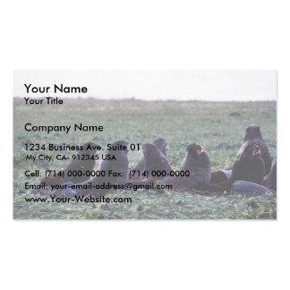 Lobos marinos septentrionales tarjeta personal