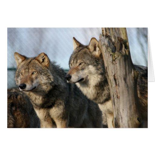 lobos tarjeta de felicitación