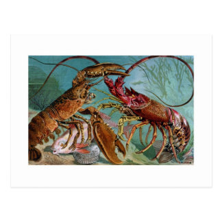Lobster and Langoustine Postcard