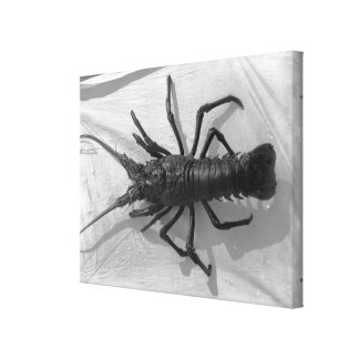 Lobster Black and White Photograph Gallery Wrap Canvas