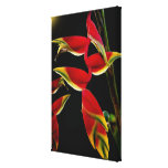 Lobster Claw Gallery Wrapped Canvas