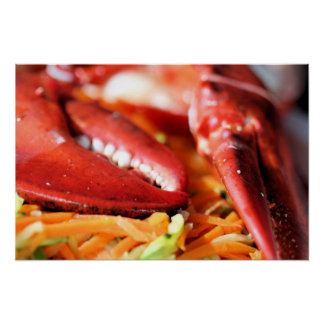 Lobster Claws Photo Poster